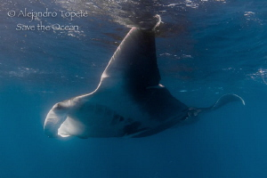 Two Manta Rays, Isla Contoy Mexico by Alejandro Topete